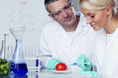 Tomato DNA. Manand women try to change tomato DNA stock images