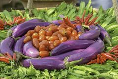 Tomato , eggplant purple , Winged Bean and red chilli The native vegetation of Thailand stock photography