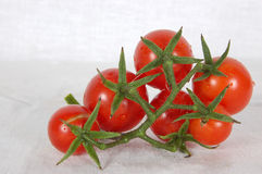 Tomato family. Some ripe, tasty, juicy, red tomatoes on a stalk on a white background Stock Images