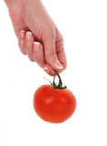 Tomato in female hand isolated on white. Background Stock Images