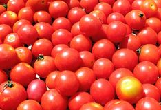 Tomato Royalty Free Stock Photos