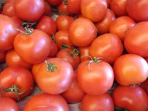 Tomato. Frische Tomaten in Markt Royalty Free Stock Photography