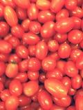 Tomato Fruit Royalty Free Stock Photos