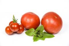 Tomato Fruit Stock Image