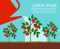 Tomato garden vector illustration Royalty Free Stock Photo