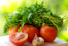 Tomato, garlic and green cilantro. Royalty Free Stock Image