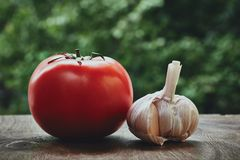 Tomato and garlic head Royalty Free Stock Images