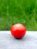Tomato on the Grass Background Royalty Free Stock Image