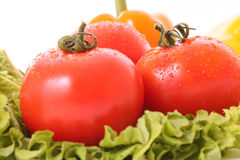 Tomato on green salad Stock Photography