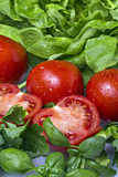 Tomato and Green Salad. Fresh Tomatoes and Green salad Stock Image