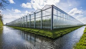 Tomato greenhouse harmelen. Great tomato nursery and greenhouse in Harmelen with summer sky Royalty Free Stock Photography