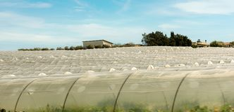Tomato Greenhouses - Pachino Sicily Italy. Greenhouses for growing tomatoes in the countryside of Pachino Syracuse Siracusa - Sicily island, Italy, Europe Stock Image