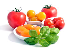 Tomato group Stock Photography