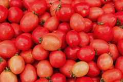 Tomato group on shelf Royalty Free Stock Photo