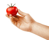 Tomato in hand Royalty Free Stock Images