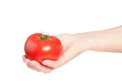 Tomato in hand Royalty Free Stock Image