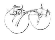 Tomato. Hand drawn Black and white illustration Royalty Free Stock Photo