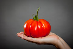 Tomato on hand. Red big tomato on hand and gray background Royalty Free Stock Images