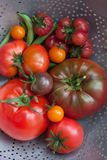Tomato harvest of heirloom tomatoes in a colander. Royalty Free Stock Photo