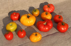 Tomato harvest. A tightly woven linen as a background Stock Photos