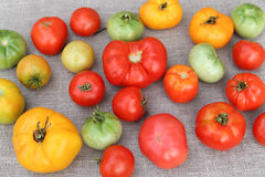 Tomato harvest. A tightly woven linen as a background Stock Photography