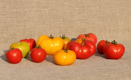 Tomato harvest. A tightly woven linen as a background Royalty Free Stock Image