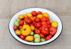 Tomato harvesting basin. A tightly woven linen as a background Royalty Free Stock Image