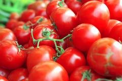 Tomato heap on open market Royalty Free Stock Photos