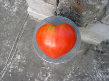 Tomato of a heart shape Stock Photo