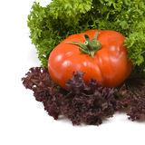 Tomato and herbs Stock Photography