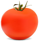 The tomato illustration Royalty Free Stock Images