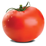 Tomato. An illustration of a tomato Vector Illustration