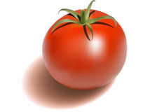 Tomato. Illustration of fresh red tomato Stock Photo