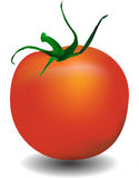 Tomato  illustration Stock Photo
