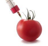Tomato injection Royalty Free Stock Images