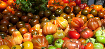 Tomato International Royalty Free Stock Photos