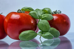 Tomato Isolatedwith basil. Basil and TOmato reflections on a glass table Stock Photo