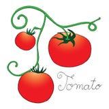 Tomato label on simple white background Royalty Free Stock Photos