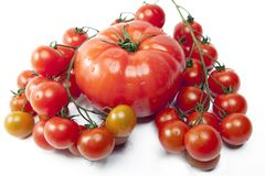 Tomato large and a branch of tomatoes small in water drops Stock Photos