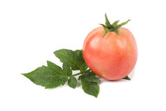 Tomato and leaf Royalty Free Stock Images