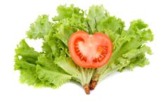 Tomato in leaf salad Royalty Free Stock Photos