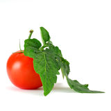 Tomato and leafs Royalty Free Stock Photography