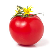 Tomato with leaves flower water drops isolated on white background Stock Image