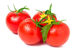 Tomato with leaves flower water drops isolated on white background Stock Photo