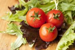 Tomato in Lettuce Salad stock image