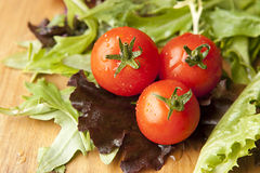 Tomato in Lettuce Salad Royalty Free Stock Photography
