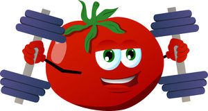 Tomato lifting weight Stock Image