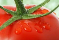 Tomato macro photo Stock Image