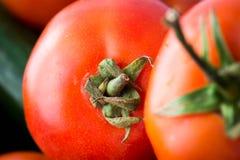 Tomato. Macro zoom look on tomatoes Royalty Free Stock Image