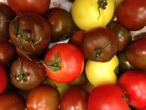Tomato. The many color Tomato Royalty Free Stock Photos